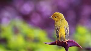 bird p hd wallpaper widescreen