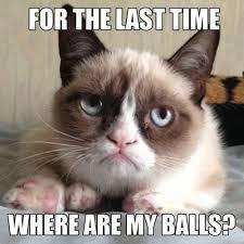 Funny Cat Meme Pictures - 21 funny cat captions random funny cat
