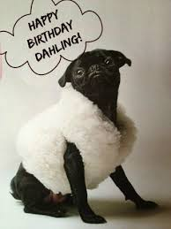 Birthday Pug Meme - a pug in sheep s clothing pinteres
