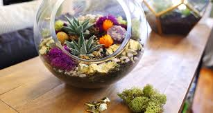 succulents part 2 creative ideas and tips for decorating with