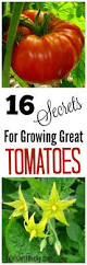 10 Tips For Growing Peppers by Whether On Your Farm Homestead Or Just Your Backyard Garden