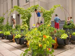 ways to get involved rooftop gardens project