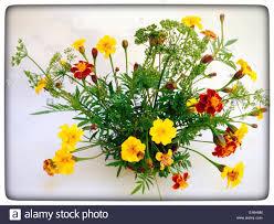british cottage garden flowers stock photo royalty free image