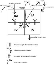 easy diagram of the heart u2013 hd m com