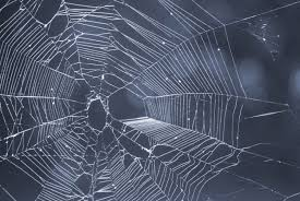 halloween spiders background image of cobweb creepyhalloweenimages