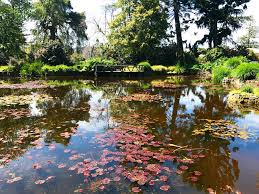 Botanic Gardens Hobart Fantastic Japanese Garden Review Of Royal Tasmanian Botanical