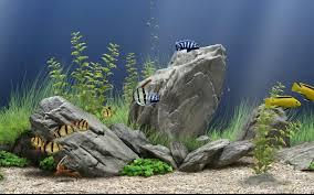 wallpaper ikan bergerak untuk pc download dream aquarium screensaver full version
