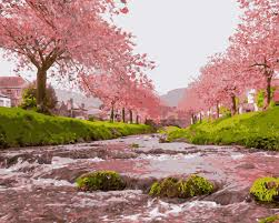 mahuaf i096 pink font b cherry b font font b blossoms b font font b trees jpg