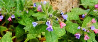 plante vivace soleil vivaces couvre sol 10 plantes à découvrir