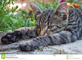 lazy cat is lying on a bench stock photo image 44248799