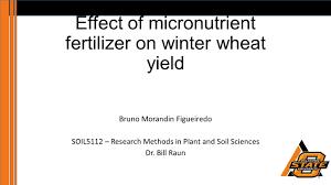 effect of micronutrient fertilizer on winter wheat yield ppt