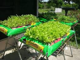it u0027s a simple weed free way to grow lettuce spinach and even