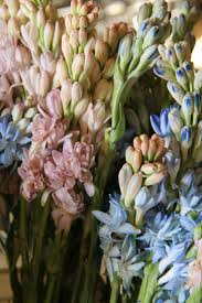 Girls Favourite Flowers - 59 best tuberose images on pinterest flowers flower power and