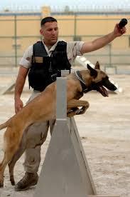 belgian shepherd vancouver u s naval security force k 9 unit training military dogs
