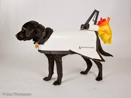 Lab Halloween Costume Ideas No Bones About It Guide Dogs For The Blind U0027s Blog Halloween