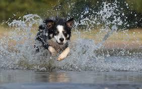 Webcam Bad Birnbach Wellness Urlaub Mit Hund In Bayern Hundehotel Moldan