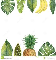 Pineapple Decorations For Kitchen by Watercolor Banner Tropical Leaves Pineapple And Banana Isolated