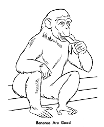 printable zoo animal coloring pages 39 best circo zoo images on pinterest drawings coloring