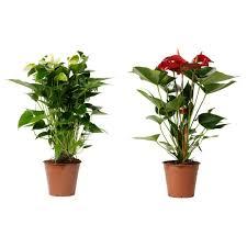 houseplants at ikea q u0026a with anna liakh u2014 jane perrone