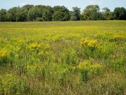 mississippi native plants working lands growing the crops of the future friends of the