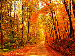 background images fall 36 wallpapers u2013 hd wallpapers