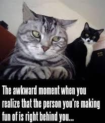 Cat Meme Boat - cat meme i should buy a boat segerios com segerios com