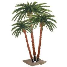 13 best outdoor palm trees images on palm trees palms
