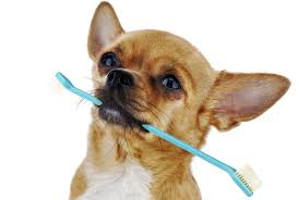 vets are divided over a new way to clean your dog u0027s teeth new