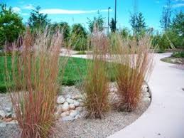 ornamental grass list dammanns