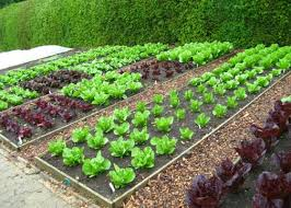 Best Vegetable Garden Layout Neat Best Vegetable Garden Layout Landscaping Backyards Ideas