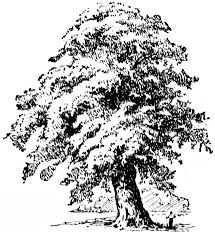 oak tree outline clipart china cps