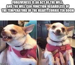 Chihuahua Meme - angry chihuahua happy chihuahua meme generator imgflip