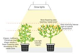 where to buy indoor grow lights grow lights position size floramax
