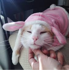 Gremlins Costume Halloween 30 Pet Cat Halloween Costumes 2017 Cute Ideas Cat Costumes