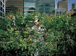 Urban Gardens San Francisco - in these cities your next snack may be growing in a public park
