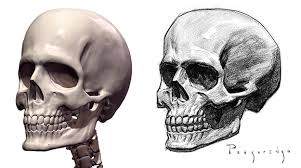 how to draw a skull special proko