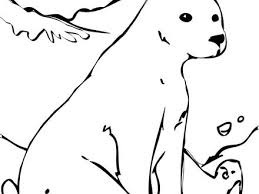 22 polar bear color free printable polar bear coloring pages