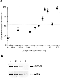 limitations of the reporter green fluorescent protein under