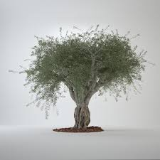 model of big olive tree