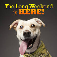 funny thanksgiving dog pictures 10 pet friendly activities for the long weekend blog