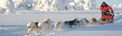 reindeer and husky excursions lapland safaris