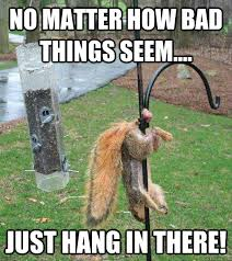 Hang In There Meme - no matter how bad things seem just hang in there nutty