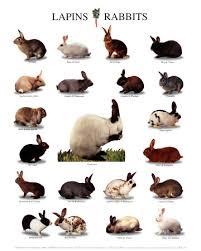 rabbit poster rabbit posters