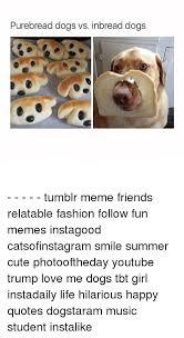 Tumblr Meme Quotes - purebread dogs vs inbread dogs tumblr meme friends