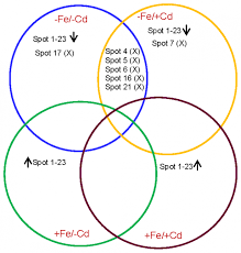 venn diagram of photosynthesis and cellular respiration compare