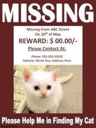 lost cat flyer template yourweek e78de7eca25e