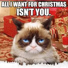 All I Want For Christmas Is You Meme - last minute christmas shopping christmas meme and grumpy cat