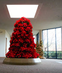 poinsettia tree poinsettias what you don t want to miss in december fort worth