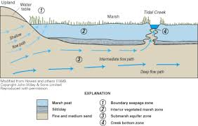 Define Water Table Ground Water In Freshwater Saltwater Environments Of The Atlantic