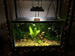 10 gallon planted tank led lighting cheap lighting solution on a low tech 10 gallon tank 30 solla 30